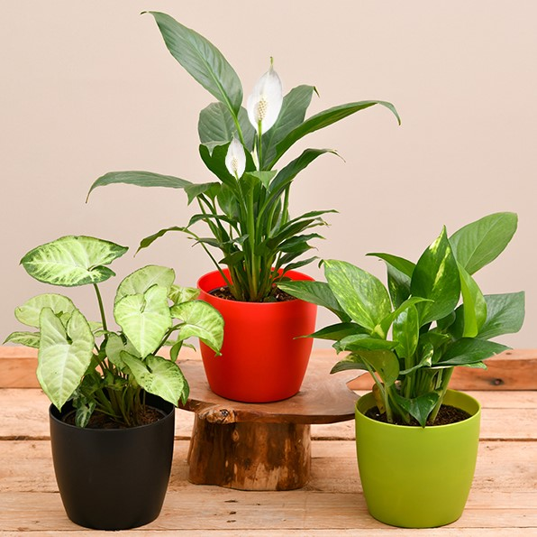 Plastic pots for indoor plants