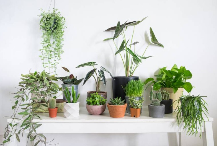 How to Choose Pots for Indoor Plants?