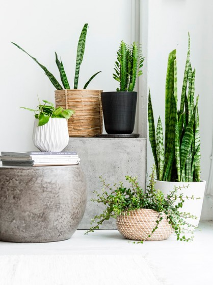 Ceramic pots for indoor plants