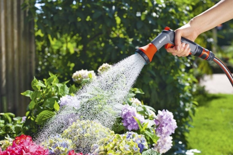 What is the Best Time to Water Outdoor Plants?